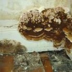 Dry Rot Treatment in Crewe