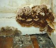 Dry Rot Treatment in Ruguley