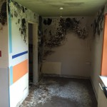 Mold Remediation In Stoke