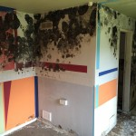 mold remediation in Congleton