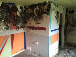 Mould Remediation in Shevington