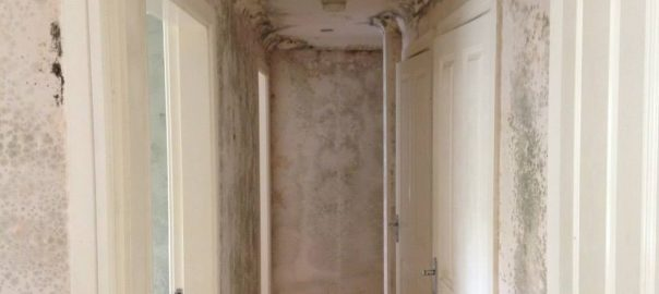 Mould Remediation in Standish