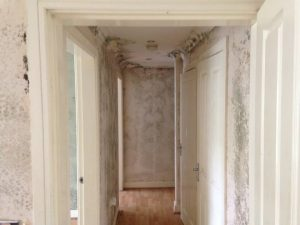 Mould Remediation in Whitchurch